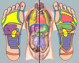 I also work with many athletes and dancers, who've found reflexology helpful ...