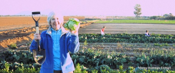 Yes, Virginia, this is where iceberg lettuce comes from